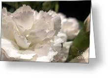 Carnation Blooms Greeting Card
