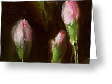 Carnation Buds  Greeting Card