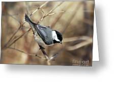 Carolina Chickadee - Birds At Bisset Park Greeting Card