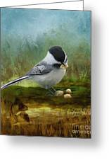 Carolina Chickadee Feeding Greeting Card