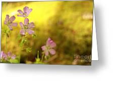 Carolina Cranesbill Greeting Card