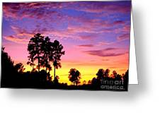 Carolina Pine Sunset Greeting Card