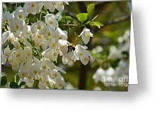 Carolina Silverbell And Bee Greeting Card