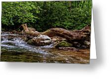 Carolina Stream Greeting Card