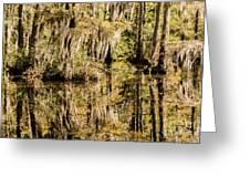 Carolina Swamp Greeting Card