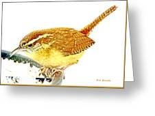 Carolina Wren On Bird Feeder Animal Portrait Greeting Card