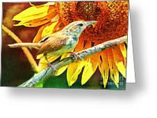 Sweet Carolina Wren Greeting Card