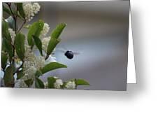 Carpenter Bee In Flight Greeting Card
