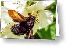 Carpenter Bee Greeting Card