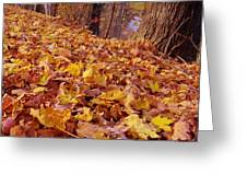 Carpet Of Fall Leaves Greeting Card