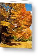 Carpet Of Leaves Greeting Card