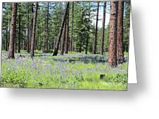 Carpet Of Lupine In Washington Forest Greeting Card