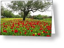 Carpet Of Poppies Greeting Card