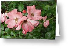 Carpet Roses Greeting Card