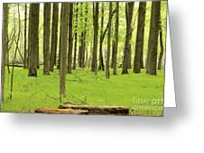 Carpeted Forest Greeting Card