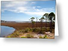 Carrabelle Salt Marshes Greeting Card