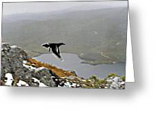 Carrawong In Flight Over Cradle Mountain Greeting Card