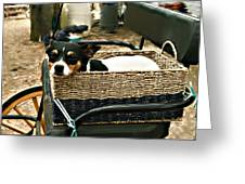 Carriage Dog Greeting Card