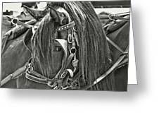 Carriage Horse Beauty Greeting Card