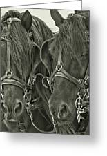 Paired Carriage Ponies Greeting Card