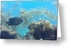 Carribean Sea Life Greeting Card