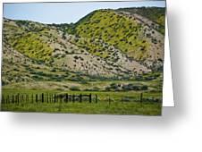 Carrizo Plain Daisy Hills Greeting Card