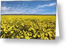 Carrizo Plain Desert Sunflower Field Afternoon Greeting Card