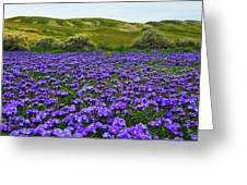 Carrizo Plain National Monument Wildflowers Greeting Card