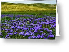 Carrizo Plain Wildflowers Greeting Card