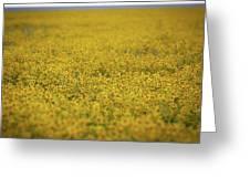 Carrizo Super Bloom Greeting Card