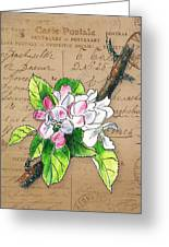 Carte Postale. Blossoming Apple Greeting Card