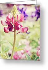 Carte Postale Red Bluebonnet Greeting Card