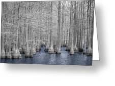 Carvers Cypress Ir 2 Greeting Card