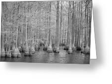 Carvers Cypress Ir Greeting Card