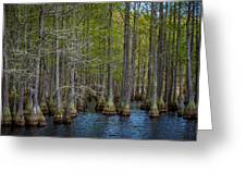 Carvers Cypress Greeting Card