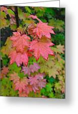 Cascade Autumn Leafs 4 Greeting Card