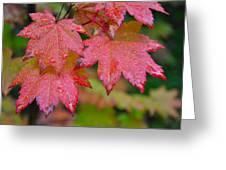 Cascade Autumn Leafs 5 Greeting Card