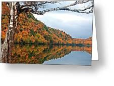 Cascade Birch Greeting Card