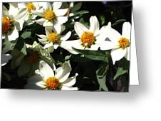 Cascade Of White Flowers Greeting Card