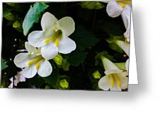 Cascade Of White Greeting Card