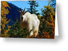 Cascade Range Mountain Goat Greeting Card