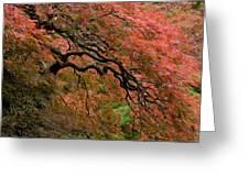 Cascading Japanese Maple Greeting Card
