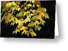 Cascading Leaves Greeting Card