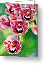 Cascading Miniature Orchids Greeting Card