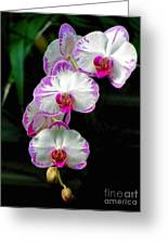 Cascading Orchid Beauties Greeting Card