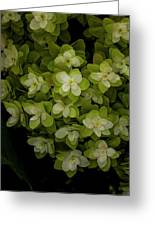 Cascading White Blossoms 2 Greeting Card