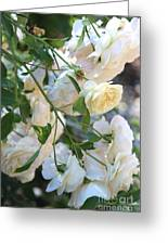 Cascading White Roses Greeting Card