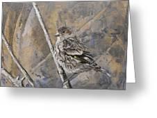 Cassin's Sparrow Greeting Card
