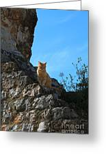 Castle Cat Greeting Card