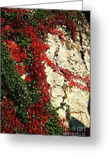 Castle Vines Greeting Card